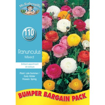 Mr Fothergill's Bulbs Bumper Ranunculus Mixed