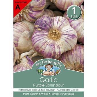 Mr Fothergill's Bulbs Garlic Purple