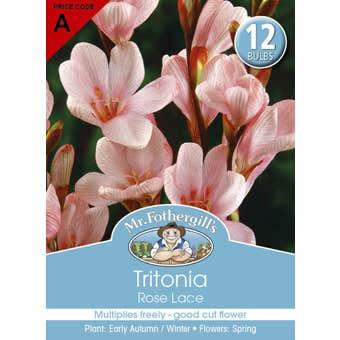 Mr Fothergill's Bulbs Tritonia Rose Lace 12 Bulbs