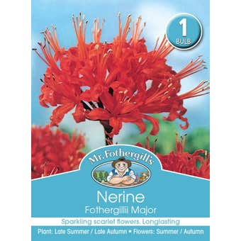 Mr Fothergill's Bulbs Nerine Fothergillii Major