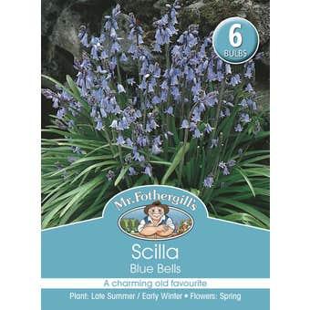 Mr Fothergill's Bulbs Scilla Blue Bells 6 Bulbs