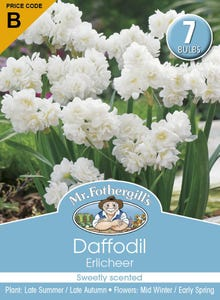 Mr Fothergill's Bulbs Daffodil Erlicheer 7 Bulbs