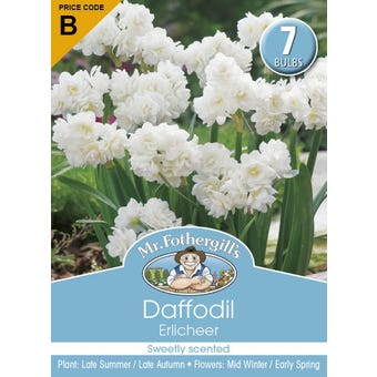 Mr Fothergill's Bulbs Daffodil Erlicheer 7 Bulbs