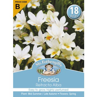 Mr Fothergill's Bulbs Freesia Refracta Alba 18 Bulbs
