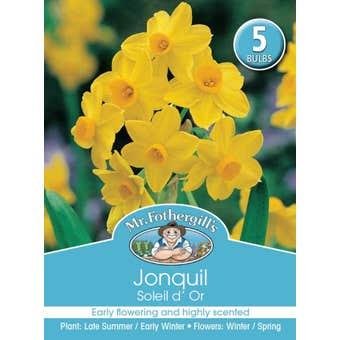 Mr Fothergill's Bulbs Jonquil Soleil D'Or 5 Bulbs