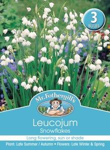Mr Fothergill's Bulbs Leucojum Snowflakes