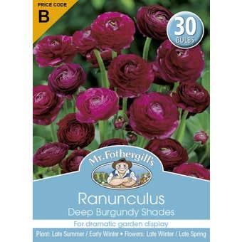 Mr Fothergill's Bulbs Ranunculus Deep Burgundy Shades 30 Bulbs