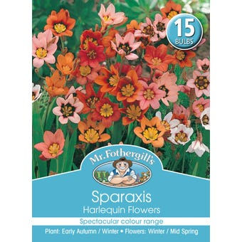 Mr Fothergill's Bulbs Sparaxis Harlequin Flowers 15 Bulbs