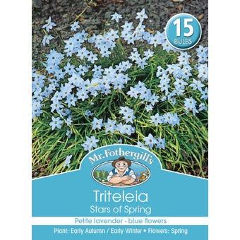 Mr Fothergill's Bulbs Triteleia Stars Of Spring 15 Bulbs