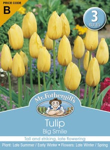 Mr Fothergill's Bulbs Tulip Big Smile 3 Bulbs