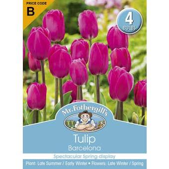 Mr Fothergill's Bulbs Tulip Barcelona Pink 4 Bulbs