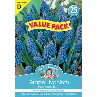 Mr Fothergill's Bulbs Grape Hyacinth Heavenly Blue