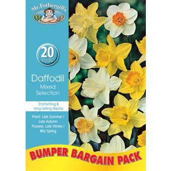 Mr Fothergill's Bulbs Daffodil Mixed 20 Bulbs