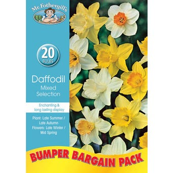 Mr Fothergill's Bulbs Daffodil Mixed 20 Bulbs