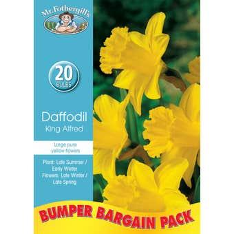 Mr Fothergill's Bulbs Daffodil King Alfred 20 Bulbs