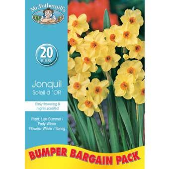 Mr Fothergill's Bulbs Jonquil Soleil D'Or 20 Bulbs