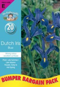 Mr Fothergill's Bulbs Dutch Iris Blue