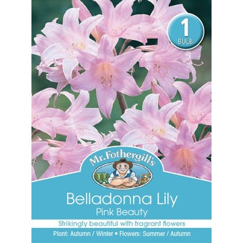 Mr Fothergill's Bulbs Belladonna Lilly Pink