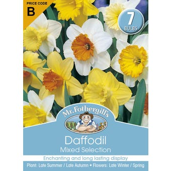 Mr Fothergill's Bulbs Daffodil Mixed 7 Bulbs