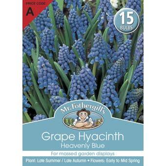 Mr Fothergill's Bulbs Grape Hyacinth Heavenly Blue 15 Bulbs