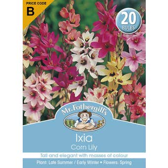 Mr Fothergill's Bulbs Ixiacorn Lily