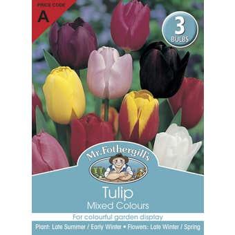 Mr Fothergill's Bulbs Tulip Mixed 3 Bulbs