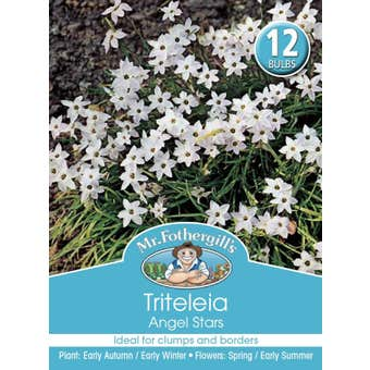 Mr Fothergill's Bulbs Triteleia Angel Stars 12 Bulbs