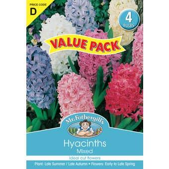 Mr Fothergill's Bulbs Hyacinth Mixed