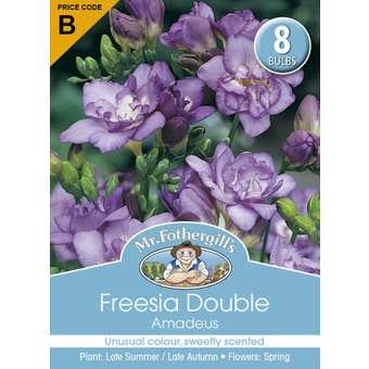 Mr Fothergill's Bulbs Freesia Double Amadeus 8 Bulbs