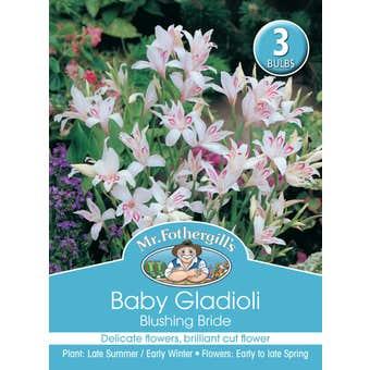 Mr Fothergill's Bulbs Gladioli Baby Blushing Bride 3 Bulbs