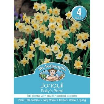 Mr Fothergill's Bulbs Jonquil Pollys Pearl 4 Bulbs