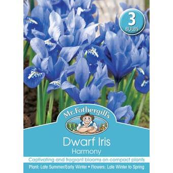 Mr Fothergill's Bulbs Dwarf Iris Harmony 3 Bulbs