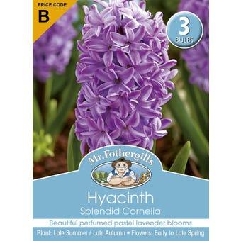 Mr Fothergill's Bulbs Hyacinth Splendid Cornelia 3 Bulbs