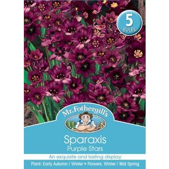 Mr Fothergill's Bulbs Sparaxis Purple 5 Bulbs