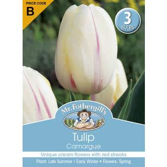 Mr Fothergill's Bulbs Tulip Camargue 3 Bulbs