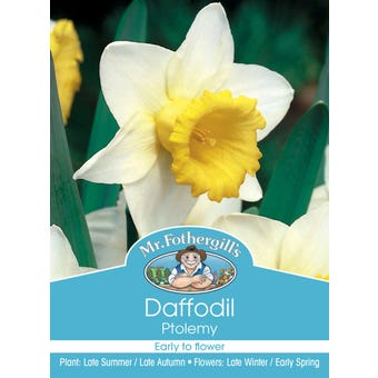 Mr Fothergill's Bulbs Daffodil Ptolemy 3 Bulbs
