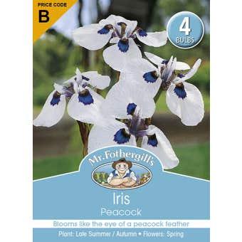 Mr Fothergill's Bulbs Iris Peacock 4 Bulbs