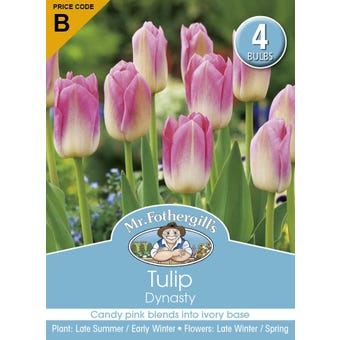 Mr Fothergill's Bulbs Tulip Dynasty 4 Bulbs