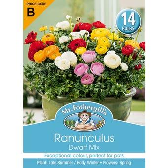 Mr Fothergill's Bulbs Ranunculus Dwarf Mixed 14 Bulbs