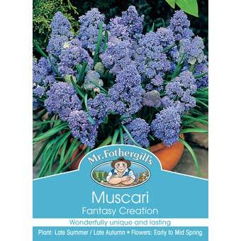 Mr Fothergill's Bulbs Muscari Fantasy Creation