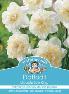 Mr Fothergill's Bulbs Daffodil Ice King 3 Bulbs
