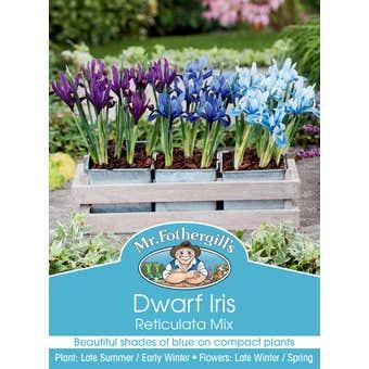 Mr Fothergill's Bulbs Iris Reticulata Mix 3 Bulbs