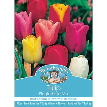 Mr Fothergill's Bulbs Tulip Single Late Mix 4 Bulbs