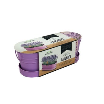 Grow Your Own Lavender Windowsill Tin