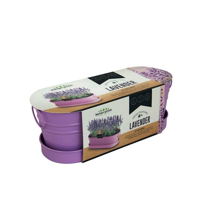 Grow Your Own Lavender Windowsill Tin