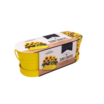 Grow Your Own Sunflower Windowsill Tin