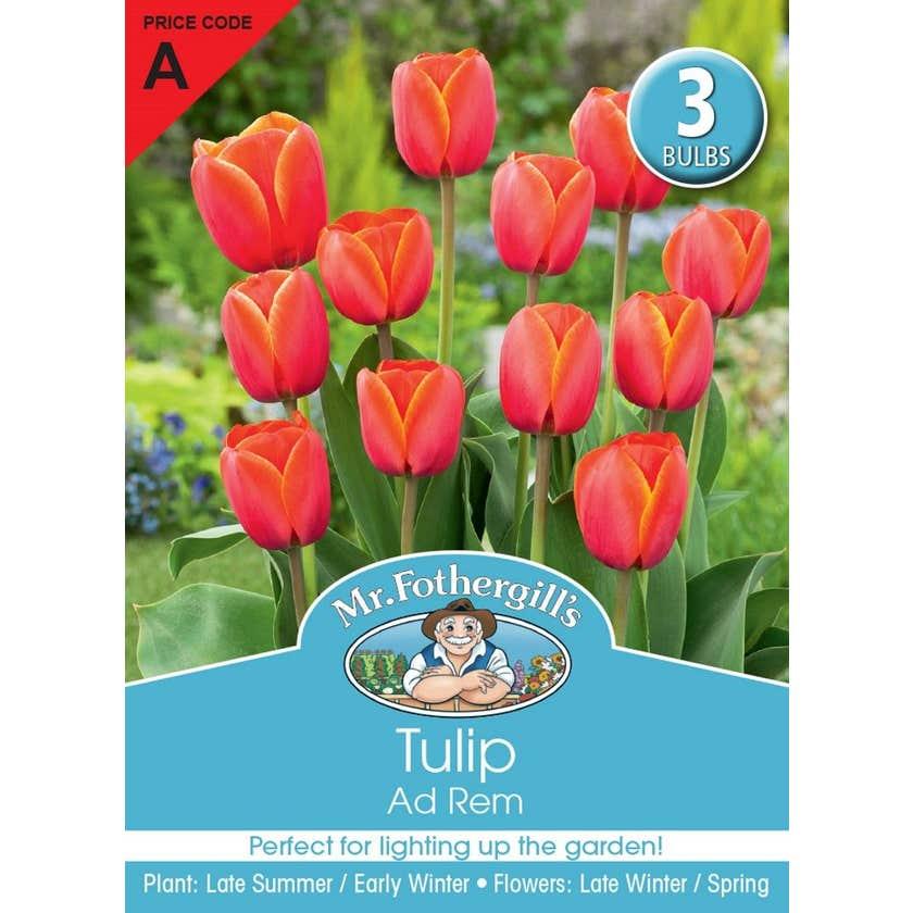 Mr Fothergill's Bulbs Tulip Adrem 3 Bulbs