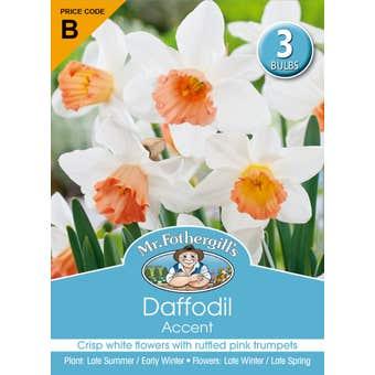 Mr Fothergill's Bulbs Daffodil Accent 3 Bulbs