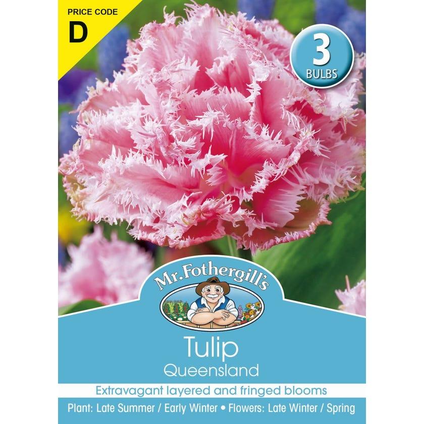 Mr Fothergill's Bulbs Tulip Queensland 3 Bulbs