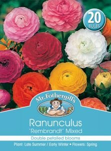 Mr Fothergill's Bulbs Ranunculus Rembrant Mixed
